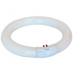 Fluorescent-Circular-tube